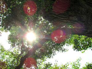 Picknick Baum